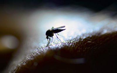 ¿Por qué las LED no atraen a los insectos?